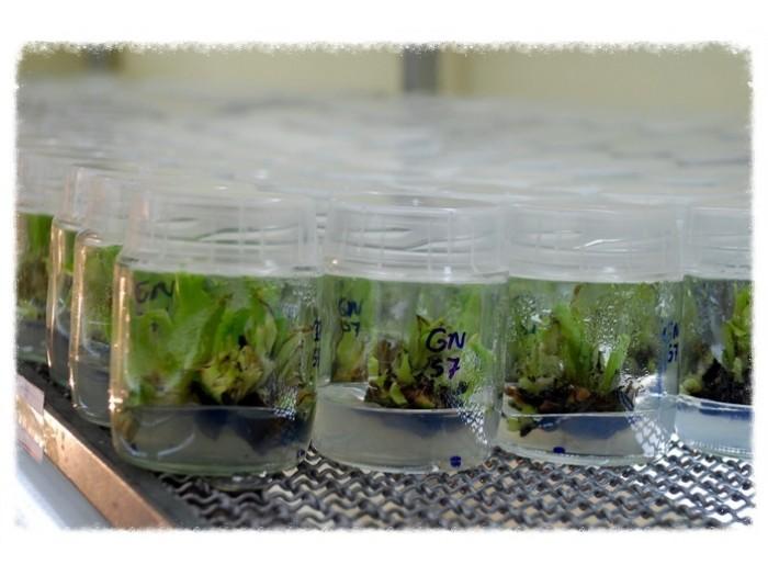 Câmaras Crescimento Biocell