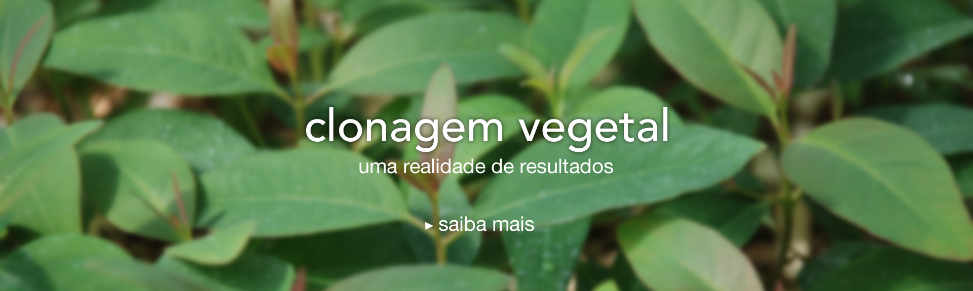 Clonagem Vegetal
